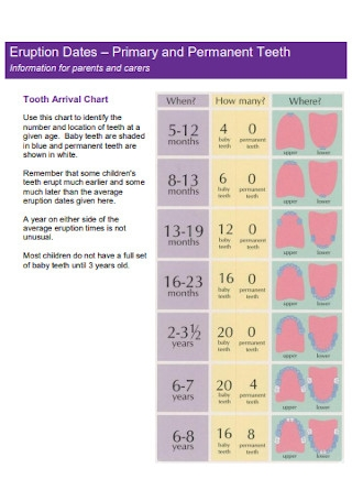 Baby Primary and Permanent Teeth Template