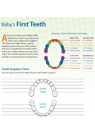Sample Baby First Teeth Chart Template