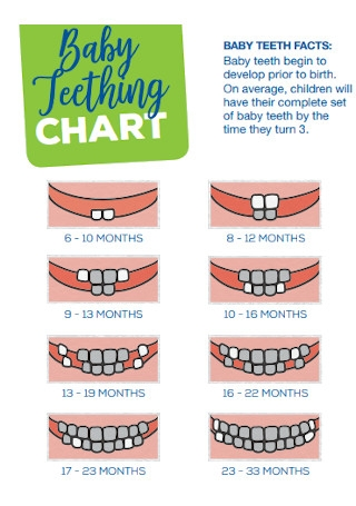 Sample Baby Teething Chart Template