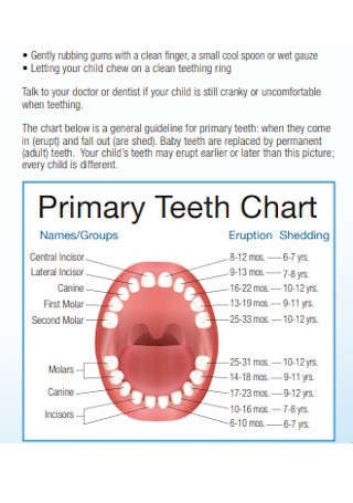 Sample Primary Teeth Chart Template
