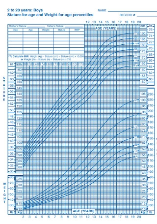 Boys Weight Percentage Chart Template