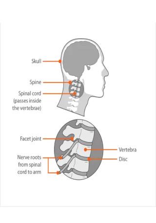 Reflexology Chart for Neck Pain