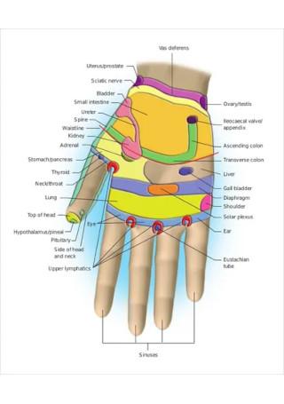 Reflexology Chart for Uterus