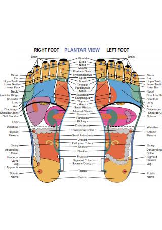 Foot Reflexology Association Chart