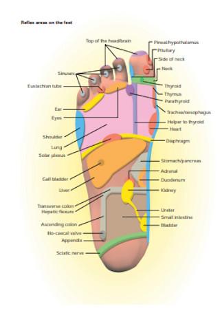 Reflex Areas on the Feet Chart