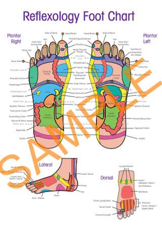 Standard Reflexology Foot Chart